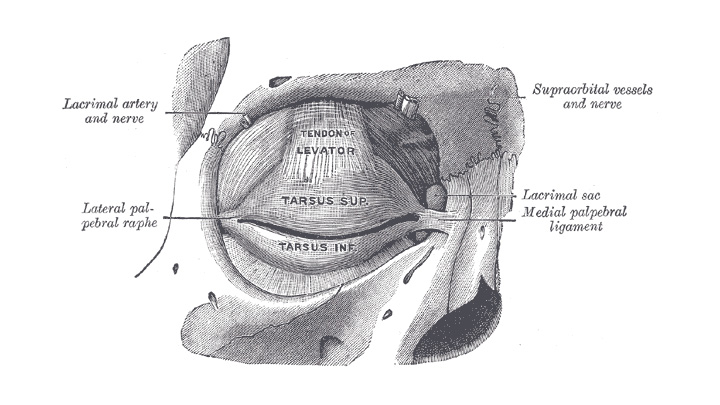 Chirurgia palpebrale