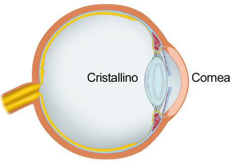 Chirurgia della Cataratta: Anatomia dell'occhio